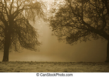 Sepia Trees - Trees in morning light
