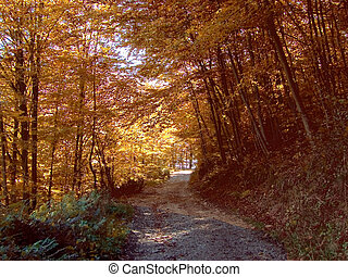 Autumnal road - Autumn