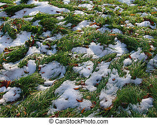 Snow Grass 2 - Snow on green grass, late autumn