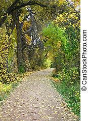 Autumn Path - Leaf strewn path through autumn landscape