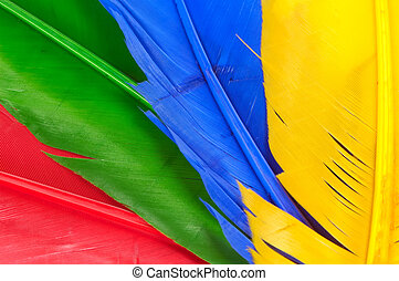Feathers - Red, Green, Blue and Yellow Feathers.