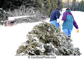 getting the christmas tree - christmas tree - husband and...