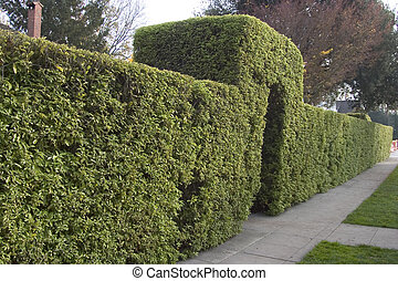 Entry Hedge - Topiary hedge with an entry arch, along a...
