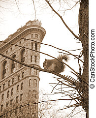 City Squirrel in Sepia Tone - A squirrel sits on a branch in...