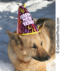 New Year Dog - German shepherd dog laying in snow wearing a...