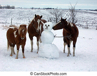 Horse Play - Horses playing in snow