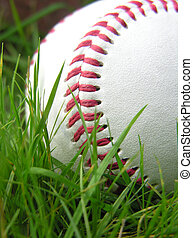 Baseball in grass - Close up of a baseball