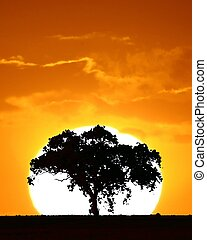 Sunset Tree - Tree at Sunset