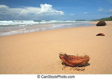 Coconut beach - Coconut copra on a tropical beach Very...