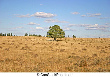 Prairie tree - Lonely tree stands out in a prairiescape of...