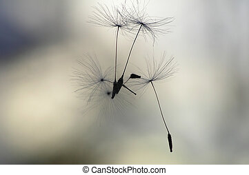 Seeds in the air – grey blurred background