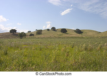 Medow Land - A beautiful green medow in northern California.