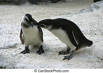 Arctic Love - Two penguins snuggle.