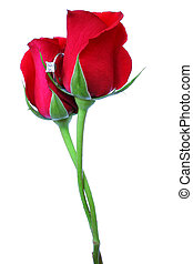 Love and Marriage - Red roses with intertwined stems and...