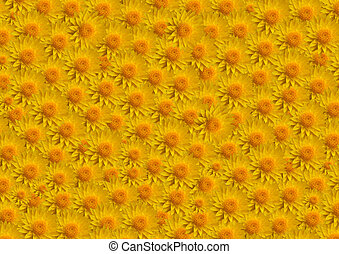Flowers yellow fill large - Large yellow flowers fill image