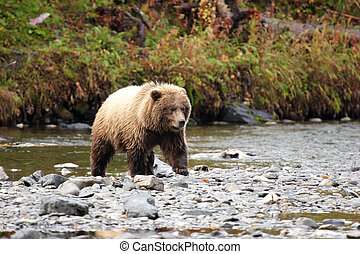 Another bear shot - AAAA It is coming