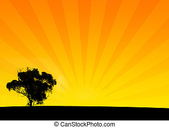 Orange Bush Silhouette Background