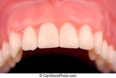 Upper Teeth - Straight and Aligned Upper Teeth