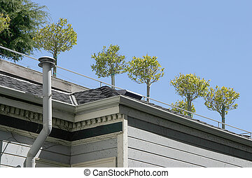Rooftop garden - A private garden on an apartment roof.