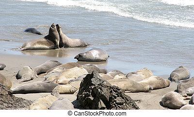 Relaxing Seals 2