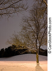 Light Post behind the Tree, Winter Scene - Vertical Shot of...