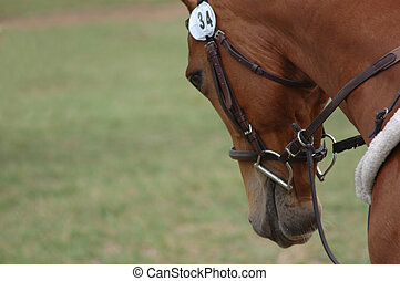 Horse trot. - Head and shoulders shot of a horse in a...