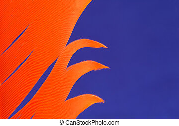 Orange Feather on a Blue Background