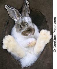 Fuzzy Feet - Baby Rabbit in a Hat