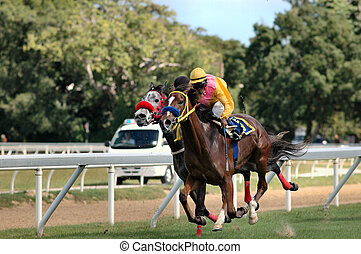 Horse Racing - Horse racing in Barbados, West Indies.