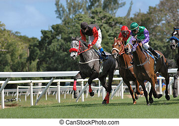 Horse Racing in Barbados, West Indies