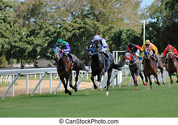 Horse Racing: A head - Horse racing in Barbados, West Indies