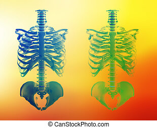 Healthcare - Illustration of two skeletons.