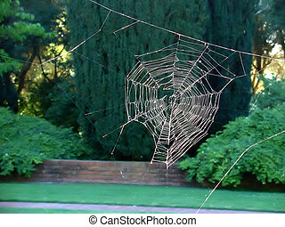 Spider web without the spider - A spider web catches the...