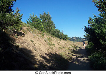Pacific Northwest Mountains - On teh hiking trail in the...