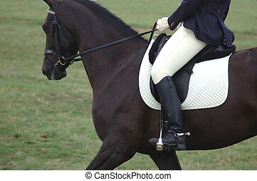 Horse and rider. - Galloping in an open green field.