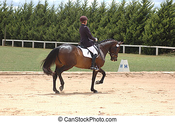 Dressage. - Horse and rider competing in dressage.