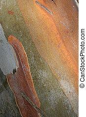 Tree bark 1 - Red gum eucalyptus bark