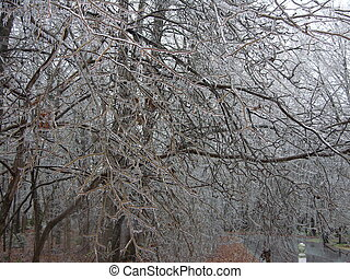 ice trees - trees after ice storm