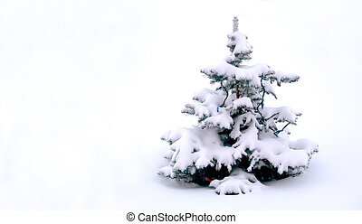 Snowed in Tree - Small Christmass tree covered in snow.