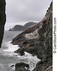 cormorants on the rocks - Cormorants of Oregon coastlines...