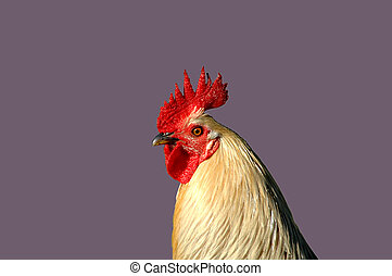 Rooster Profile