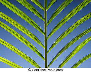 Green leaf on light blue background