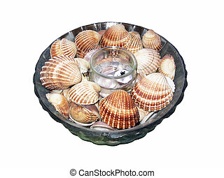 Seashells in plate