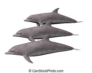 Three Dolphins - Three dolphins isolated