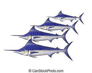 Four Marlin isolated
