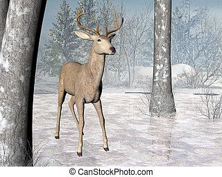 Forest Deer - Deer in a winter forest