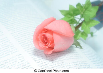 Rose on Book - best shot for themes of valentine's...