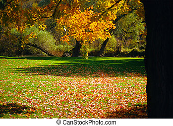Park - A park in the beautiful colors of Autumn