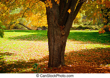 Autumn Park - A park in the beautiful colors of Autumn.