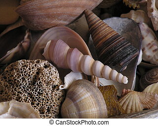 seashells - various seashells